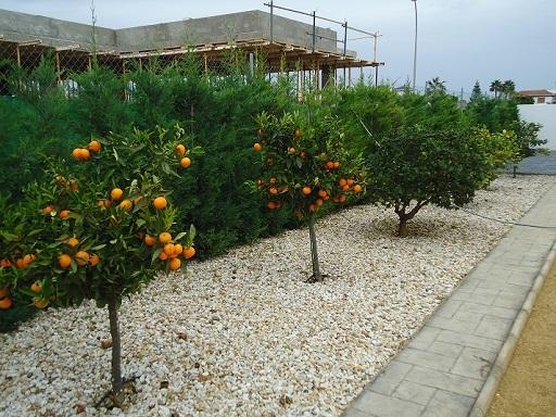 13 arbres fruits
